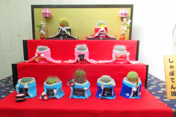 伊豆シャボテン動物公園サボテン雛の三段飾り